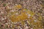 moss_n_leaves